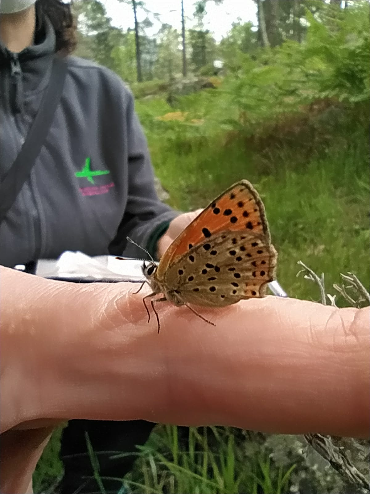 Muestreo de mariposas diurnas del Risquillo