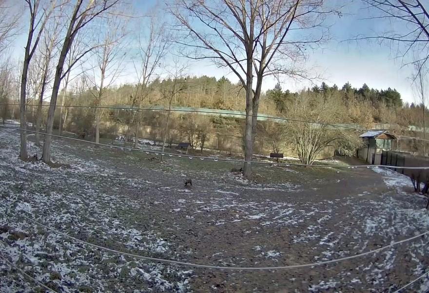 La osezna Éndriga, trasladada al recinto de aclimatación de osos pardos de la finca Valsemana (León) para avanzar hacia su reintroducción en el medio natural