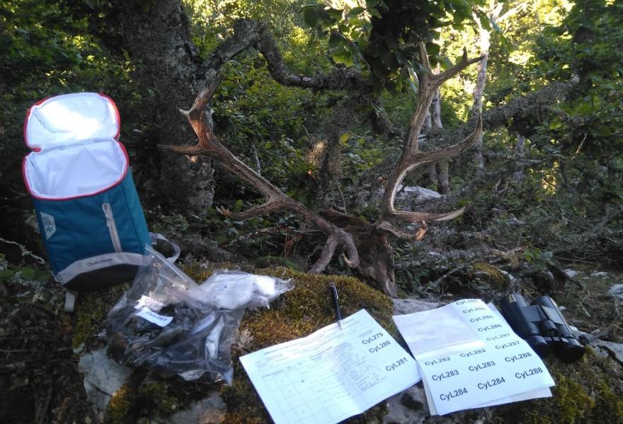 Finalizan los trabajos de campo del primer censo genético nacional de oso pardo cantábrico