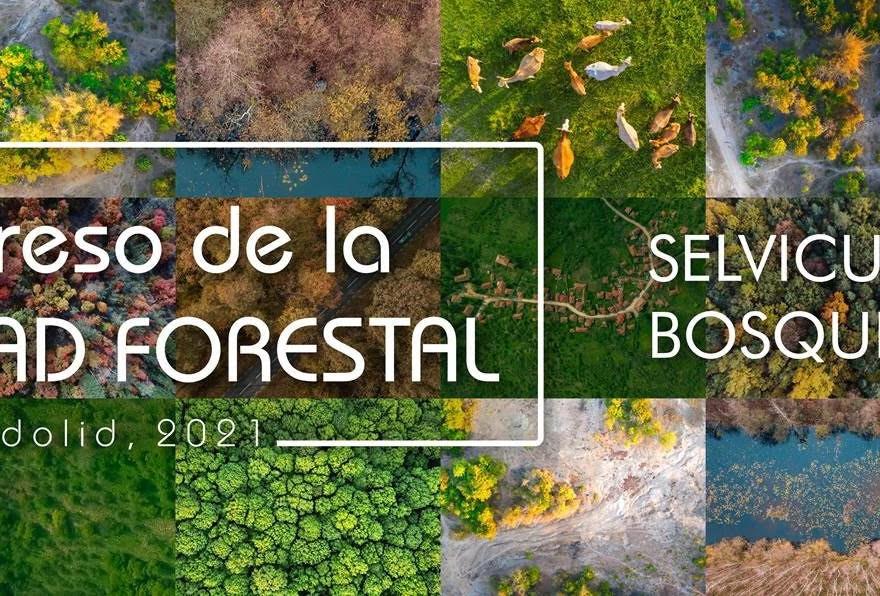 Cerca de 200 inscritos a la Jornada en línea Pre Congreso de la Propiedad Forestal que será inaugurada por el director general de Patrimonio Natural y el presidente de FAFCYLE