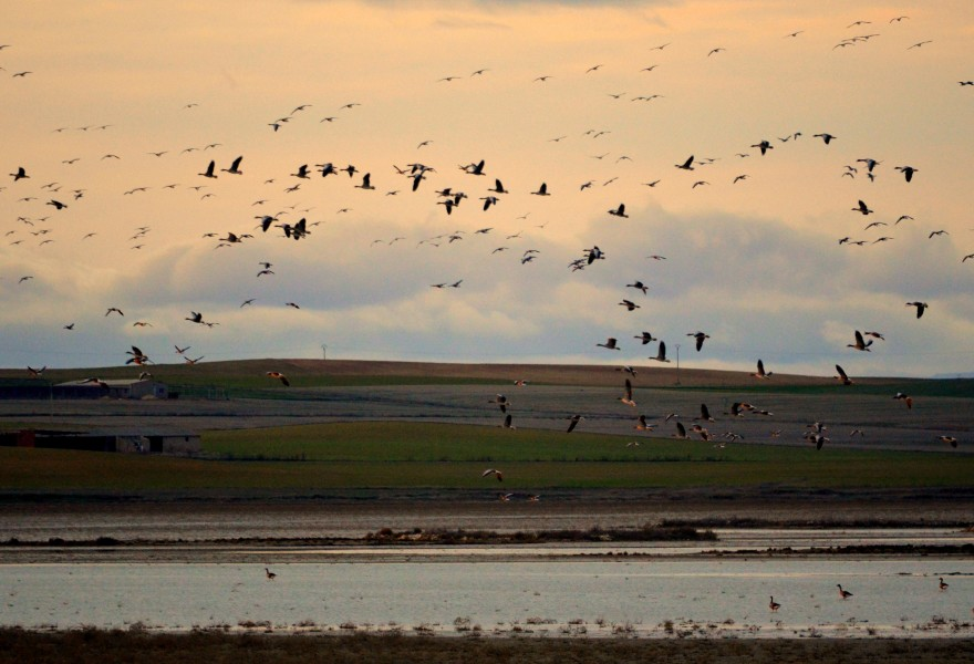 La recuperación de humedales en Castilla y León será un elemento clave en las propuestas de restauración de ecosistemas de los fondos de nueva generación de la Unión europea