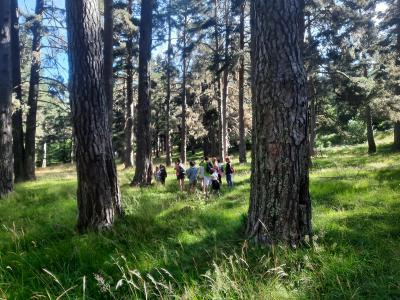 Visitas guiadas al pinar de Puebla de Lillo