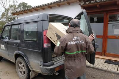 Agentes medioambientales trasladas a un animal al CRAS