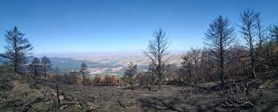 El programa de voluntariado del parque nacional de Guadarrama comienza con las actuaciones en la zona afectada por el incendio de agosto