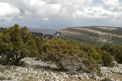 La Junta aprueba el Anteproyecto de Ley de Declaración del Parque Natural 'Sabinares del Arlanza-La Yecla', en Burgos