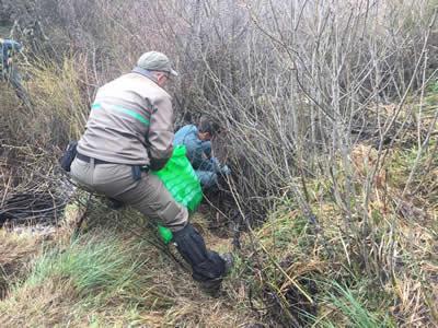 Aparecen los restos esqueletizados de un ejemplar adulto de oso pardo en Herreruela de Castillería (Palencia)