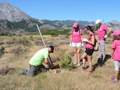 Voluntariado Ambiental:Levantando árboles entre el sonido de la berrea