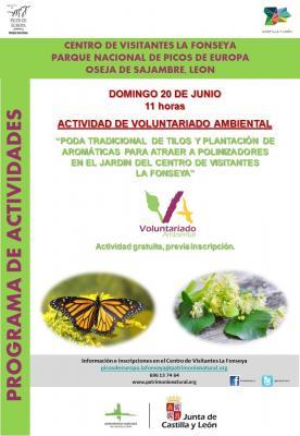 Voluntariado Ambiental : Poda tradicional de Tilos y plantación de aromáticas.