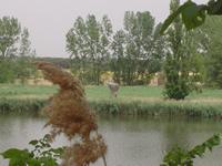 Riberas de Castronuño (Valladolid)