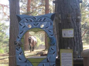 Bosque de Aventuras Hoyos del Espino