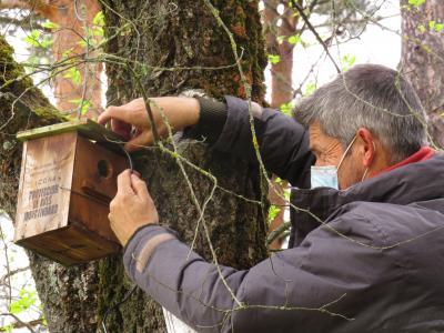 Censo aves nidificantes en cajas nido