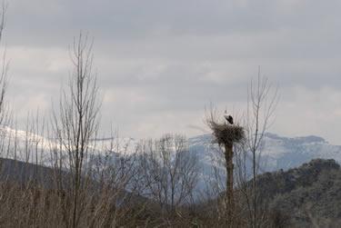 Cigueña en la Montaña Palentina