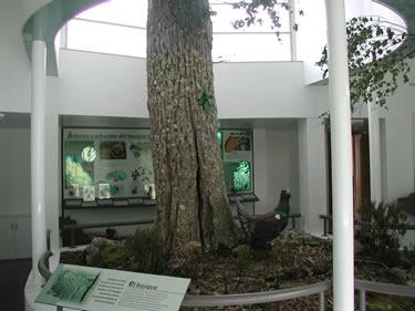 Interior del Centro del Urogallo - Caboalles de Arriba (León)
