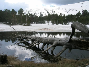 Laguna de los Patos (P.N. Lagunas Neila)