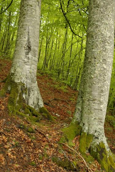 Espacio Natural Montes Obarenes - San Zadornil -(Burgos)
