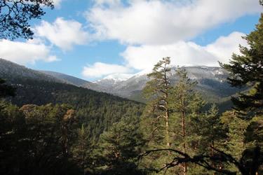"""Paisajes de Montaña con Pinus sylvestris. Montes de Valsaín - Parque Nacional """"Sierra de Guadarrama"""""""