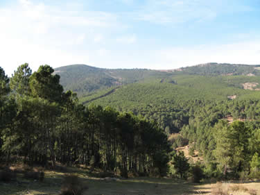 Camino de San Gregorio